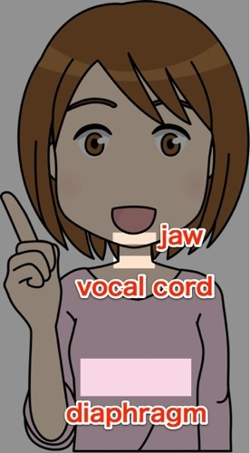 jaw-vocal cord